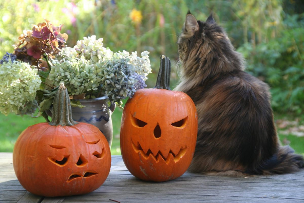 Prevent your pets being 'spooked' this Hallowe'en