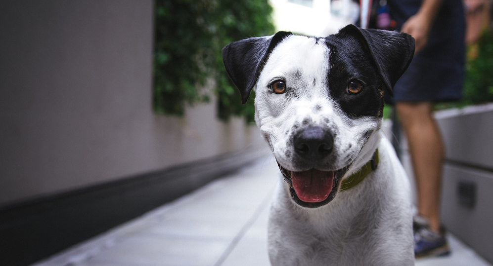 £25 off the cost of neutering your dog