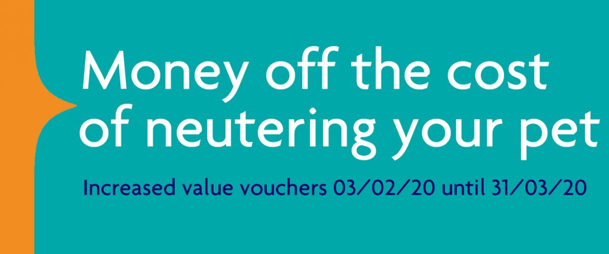 Special offer on neutering vouchers