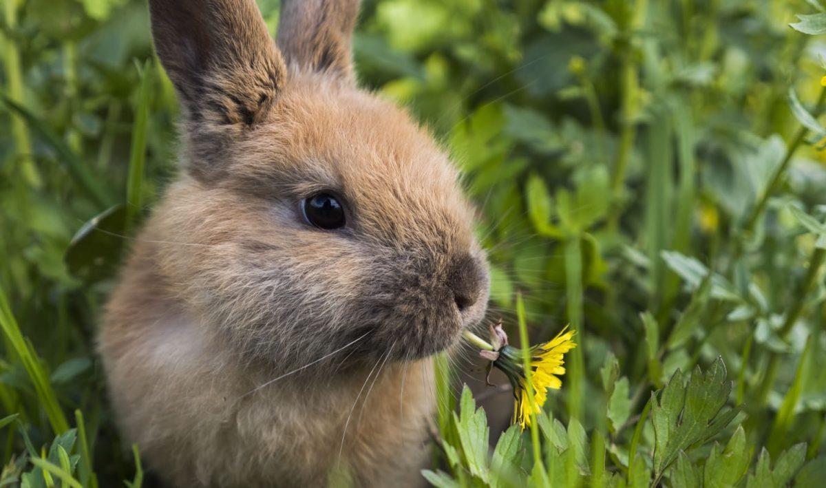 Rabbit Awareness 10th – 23rd Aug 2020