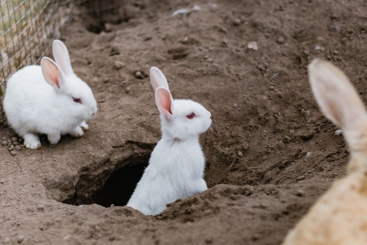 Preventable rabbit diseases