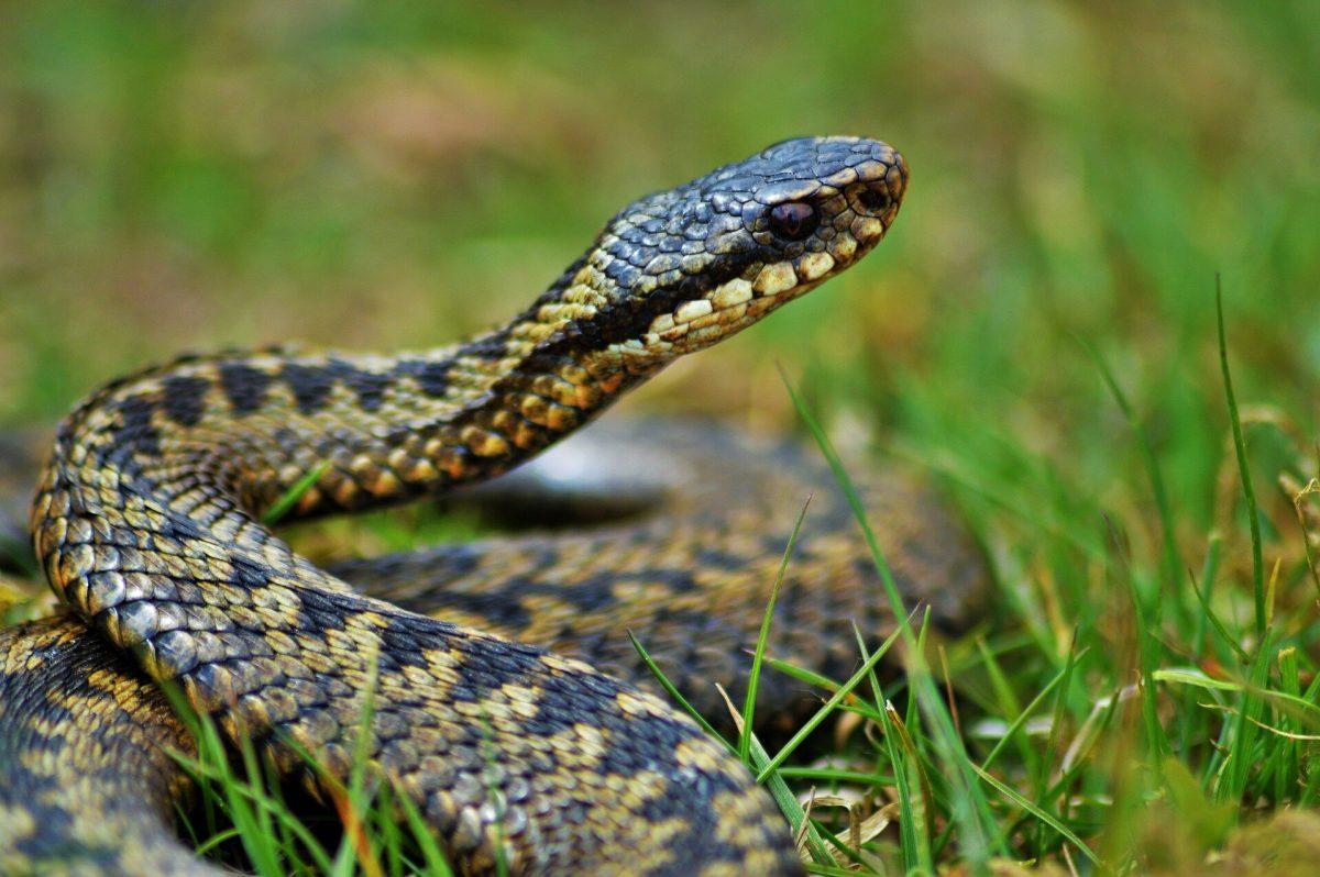 For snakes sakes